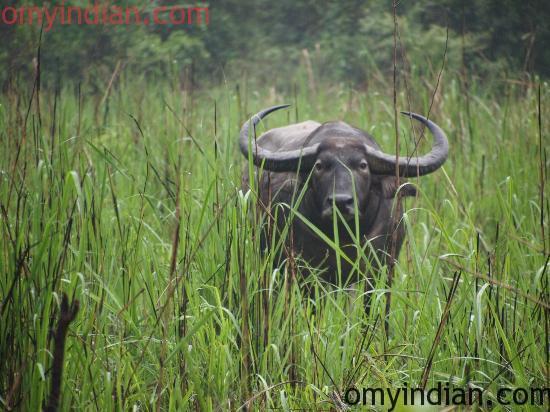 Manas National Park, Assam-min