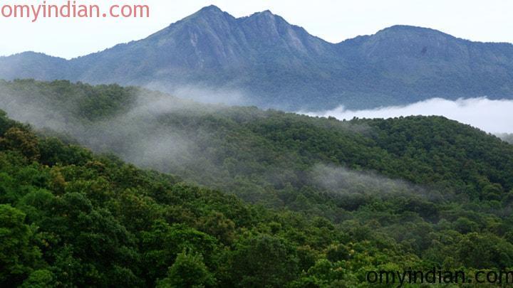 silent_valley_national_park_palakkad20131031115538_157_1-min